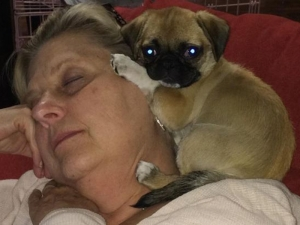 Pug puppy with new mom!